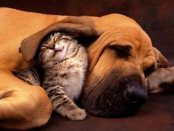 Cat Snuggling a Dog